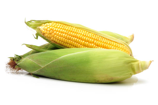 Yellow corn on a white background stock photo