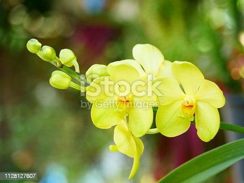 Orchid, Bouquet, Plant, Botany, Close-up