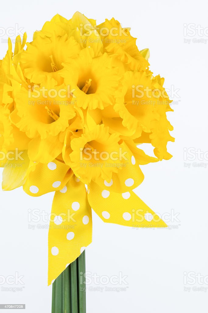 Yellow daffodil bouquet with bow stock photo
