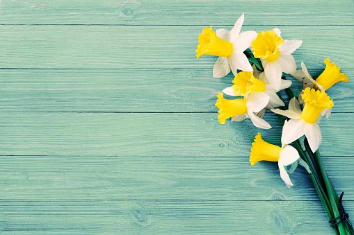 Yellow daffodils background