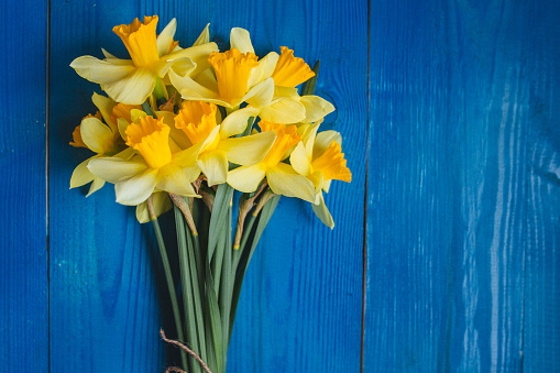 Yellow daffodils bouquet on blue wooden background, easter card