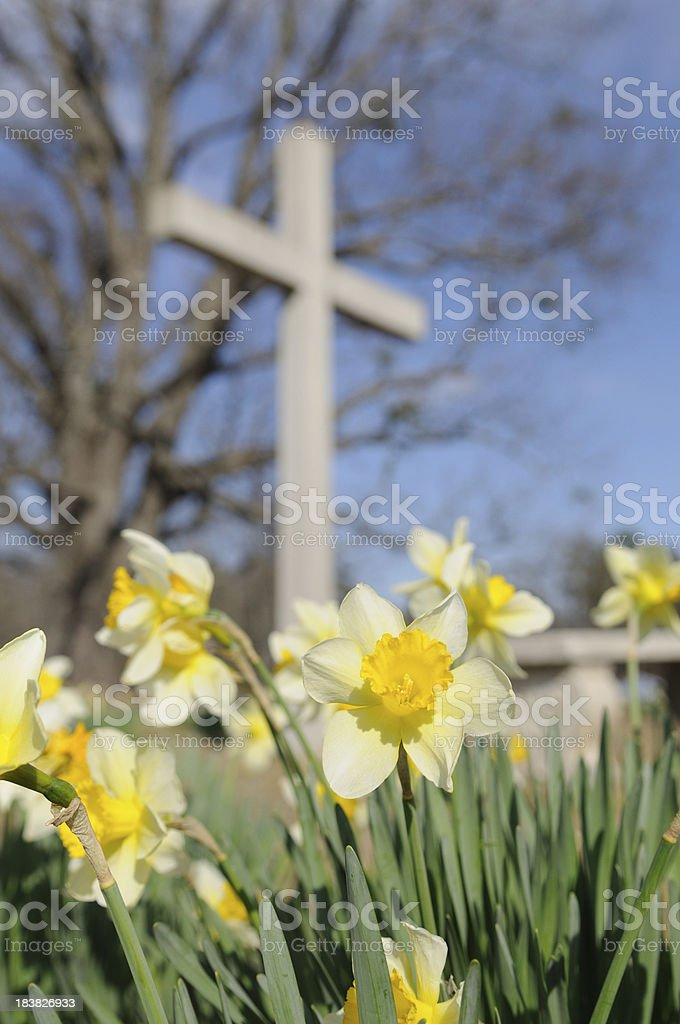 Yellow Daffodils in Front of a White Cross stock photo