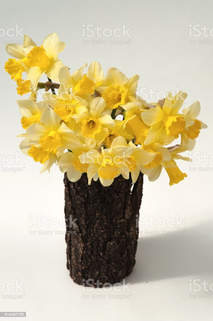 Yellow Daffodils On White Background In Wooden Vase Stock Photo
