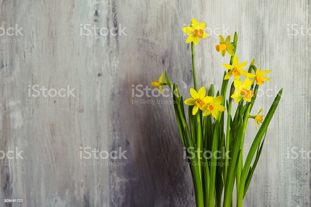 yellow daffodils on wooden background stock photo
