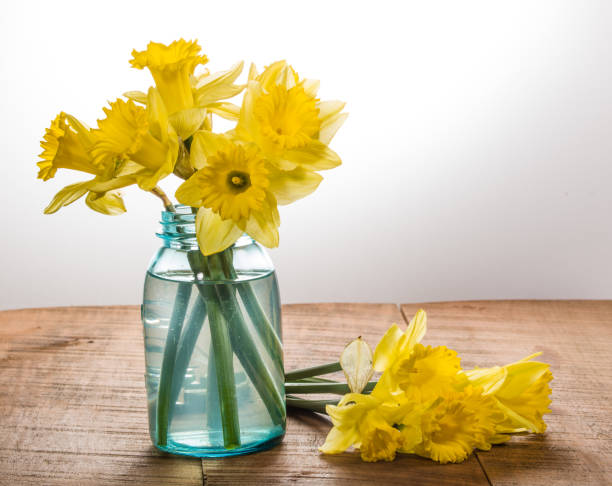 Yellow dafodills in blue jar stock photo