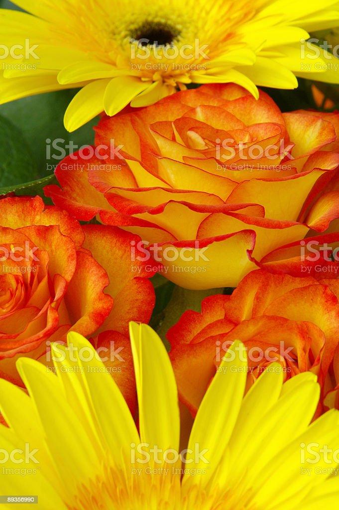 Yellow daisies and orange roses royalty-free stock photo