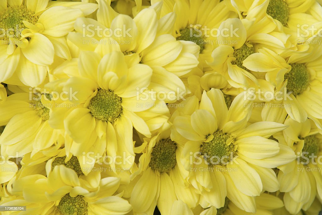 Yellow Daisy Full Frame Flower Background royalty-free stock photo