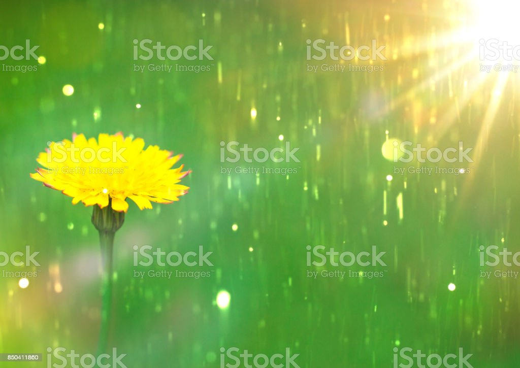 Yellow dandelion flower close up yellow flower stock photo more yellow dandelion flower close up yellow flower royalty free stock photo mightylinksfo