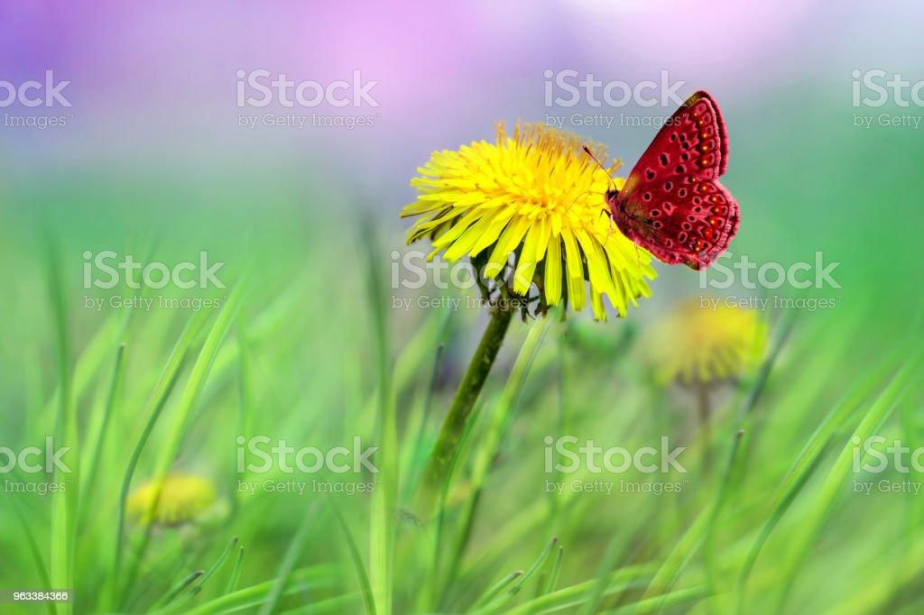 Yellow dandelion flower close-up on delicate green background, - Zbiór zdjęć royalty-free (Abstrakcja)