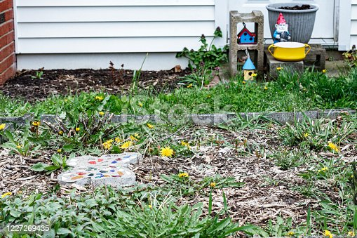 Many flowering, blooming, bright yellow dandelions and a few generic yellow art and craft decorative gardening objects arranged among grass and multiple green weed varieties in a messy, yet-to-be-cultivated early spring vegetable garden. Submitted to image brief #775513631 -