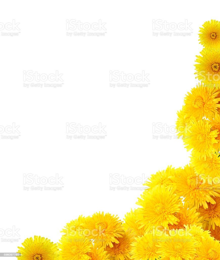 Yellow Dandelions Border royalty-free stock photo