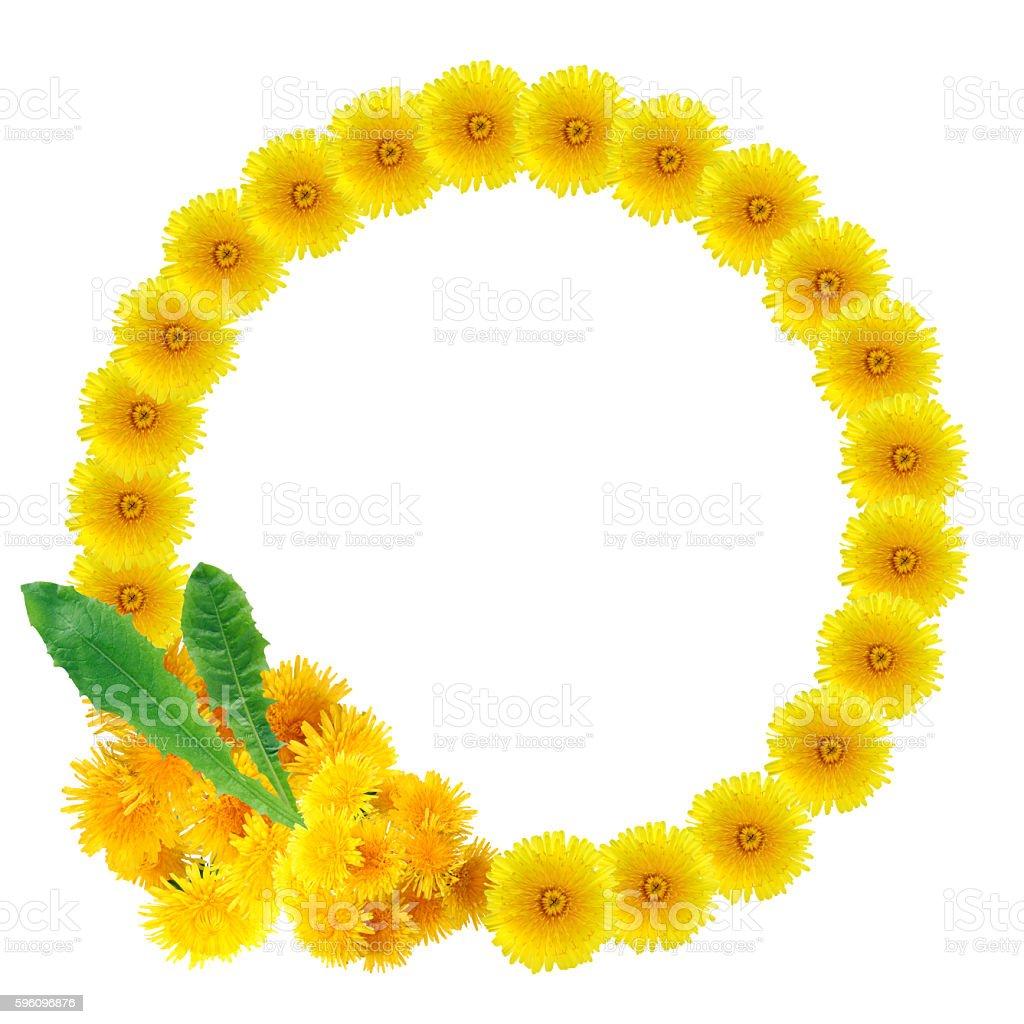 Yellow Dandelions Wreath royalty-free stock photo