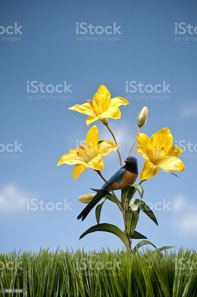 Yellow Day Lilies With Bird Growing In The Grass royalty-free stock photo