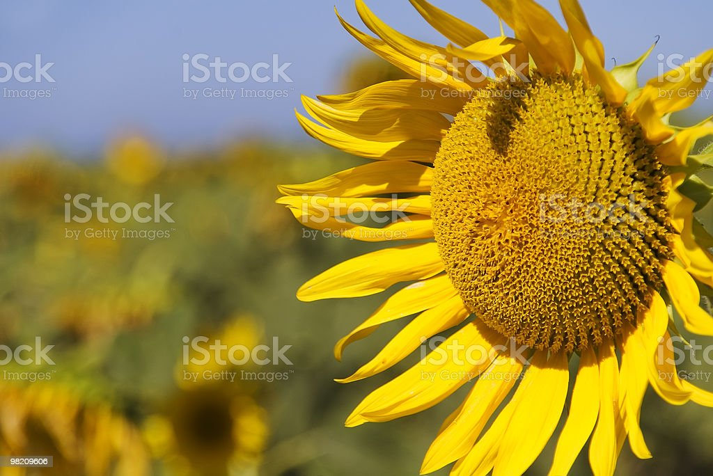 yellow day royalty-free stock photo