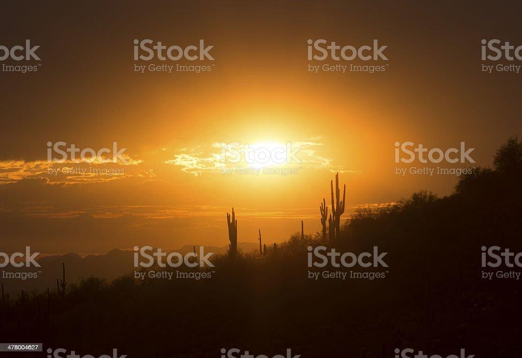 Yellow Desert Sunset royalty-free stock photo