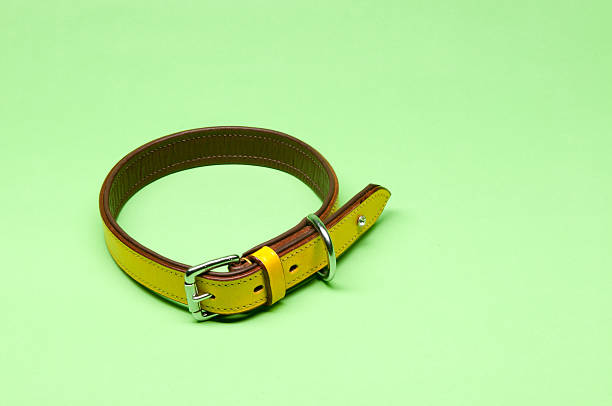 Yellow Dog Kragen – Foto