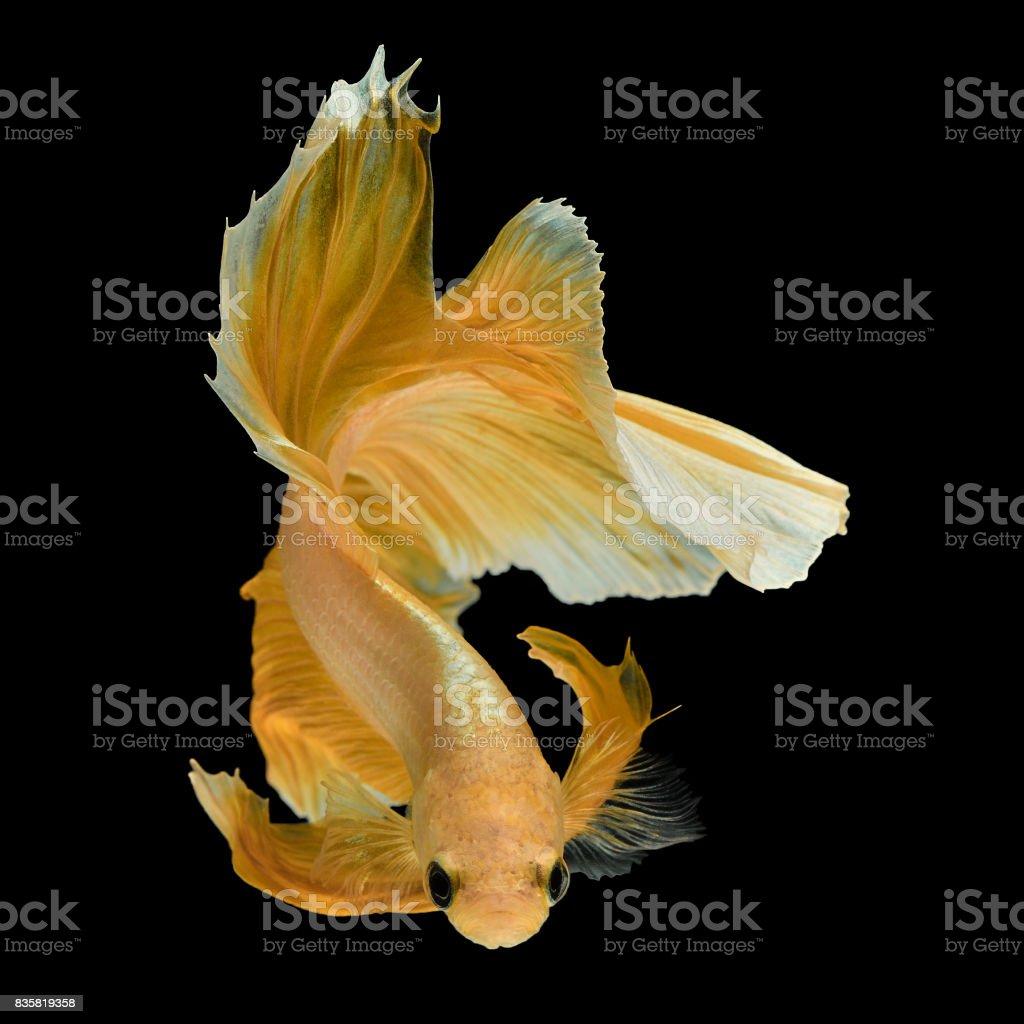 yellow dragon stock photo