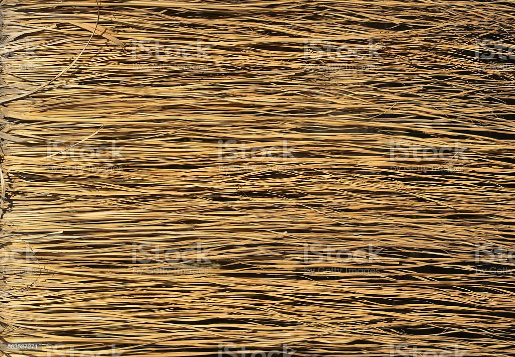 Yellow dry grass surface stock photo