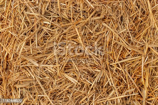 istock Yellow dry hay straw backdrop texture. Dry cereal plants, farm rural agricultural. 1182448020
