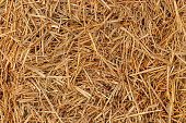 Yellow dry hay straw top view, background backdrop texture. Dry cereal plants, farm rural agricultural.