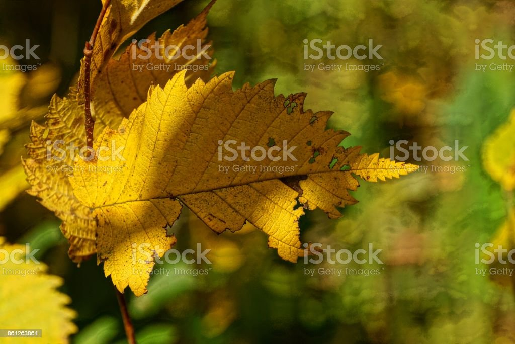 yellow dry leaf on a tree branch in the forest royalty-free stock photo