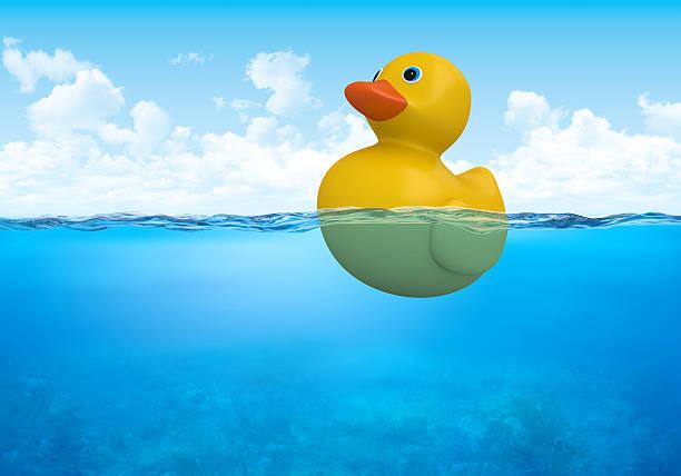 Yellow duck in waterline stock photo
