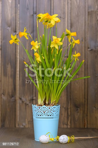 Yellow Easter Flowers Narcissus In Blue Flowerpot Stock Photo More