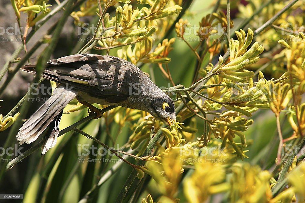 Yellow Eyed Bird stock photo