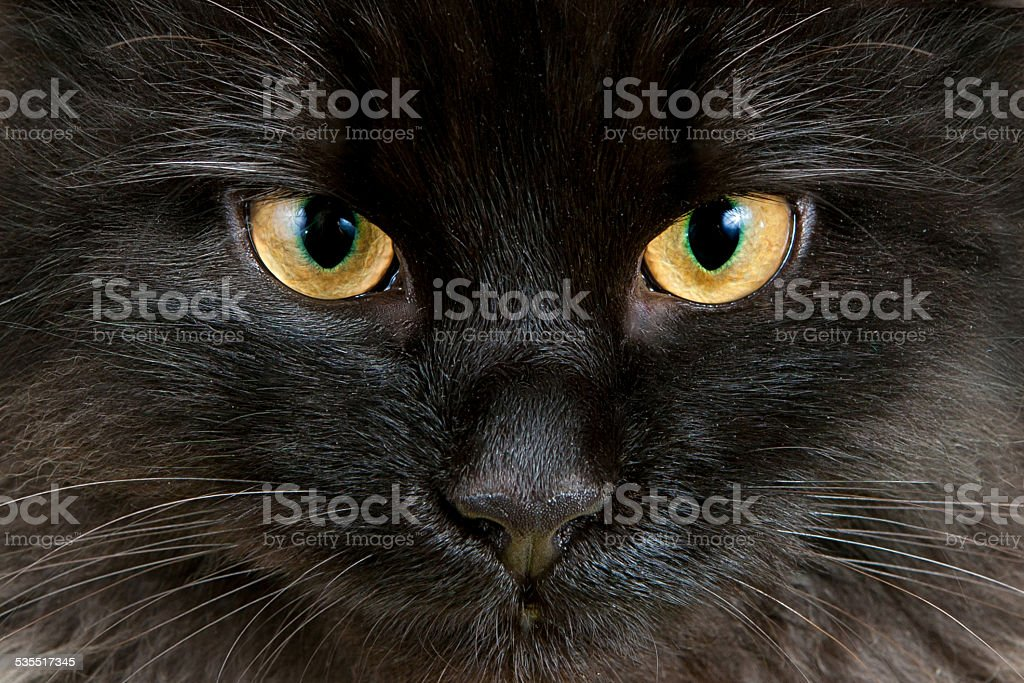 Yellow eyes of black cat close-up stock photo
