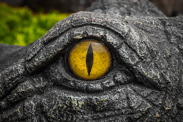 Yellow eyes of crocodiles. Gators are staring with round yellow eyes. Devil eyes. animal eye stock pictures, royalty-free photos & images