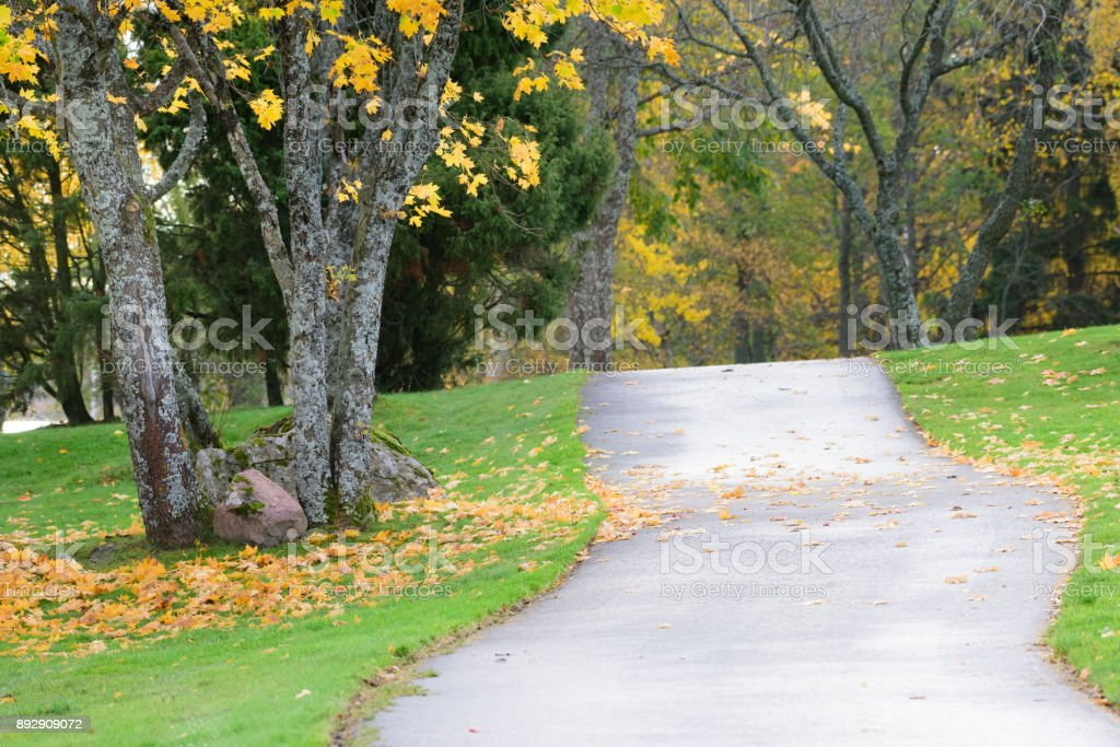 Yellow fall leaves, walkpath stock photo