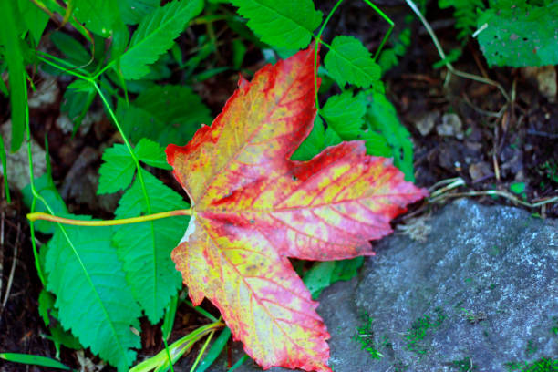 Sarı düşmüş sonbahar yerde yaprakları stok fotoğrafı