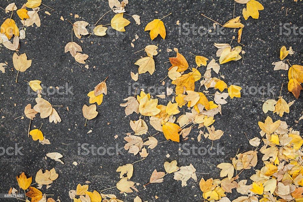 Yellow fallen autumnal leaves lay on asphalt road stock photo