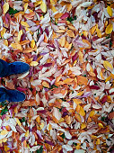 yellow fallen leaves on the ground. leaves in late autumn, yellow-red in colour.