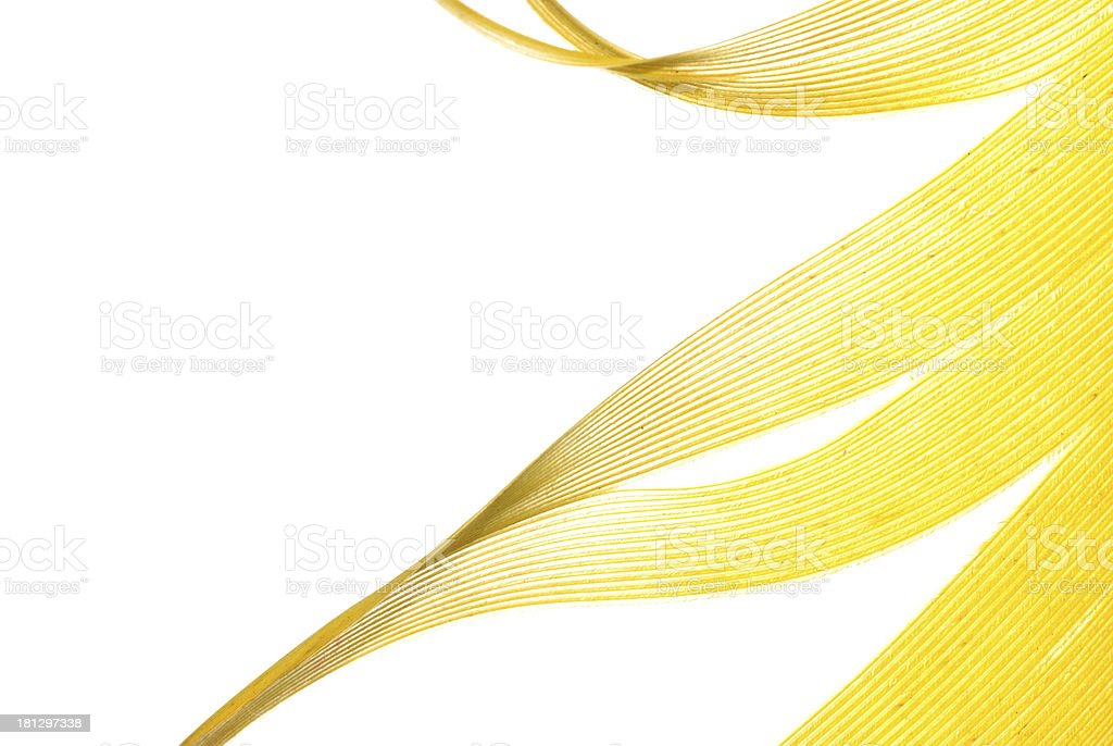 yellow feather abstract texture background royalty-free stock photo