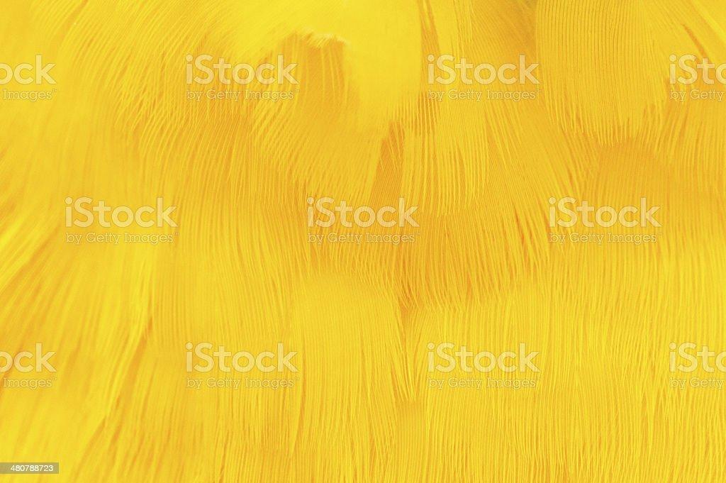 Amarelo textura de penas - foto de acervo