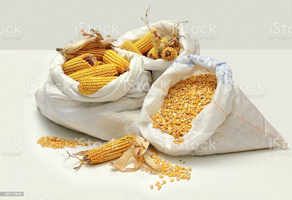 Yellow Feed Corn in Sacks on Silver royalty-free stock photo