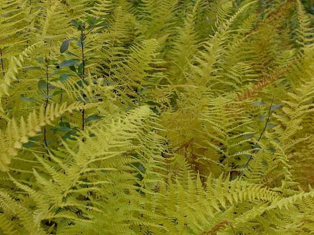Yellow Ferns and Green Stalks stock photo