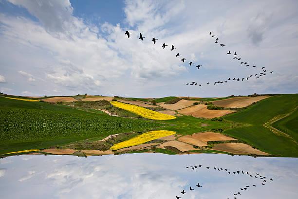 Gelbe Feld – Foto