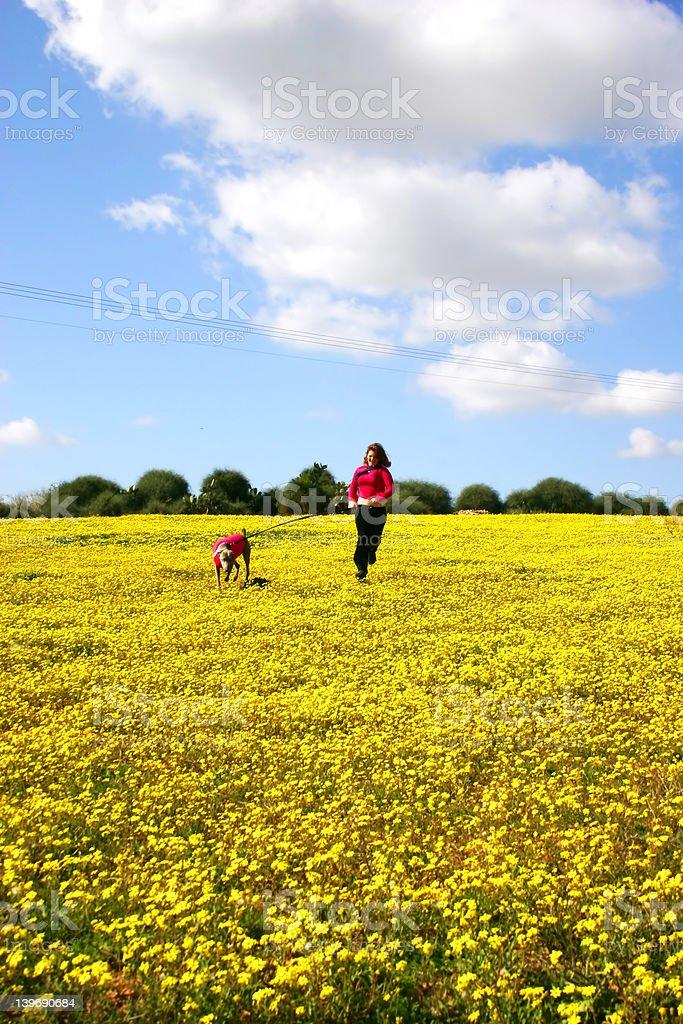 yellow field3 royalty-free stock photo