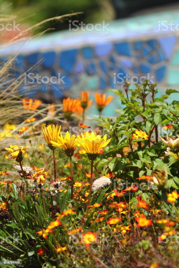 Yellow firewheel. stock photo