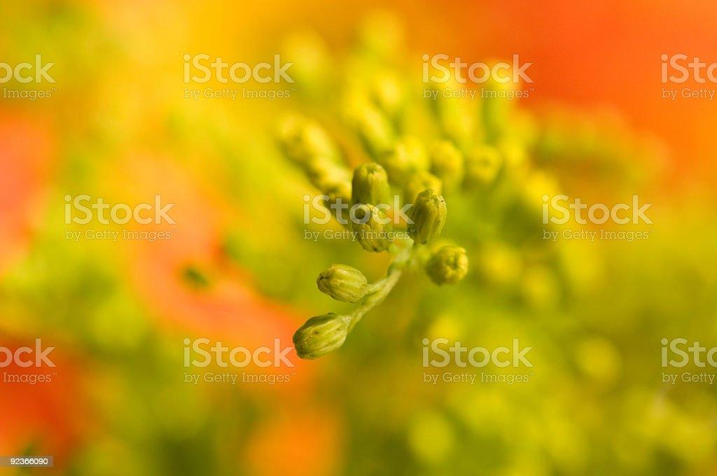 Yellow floret royalty-free stock photo