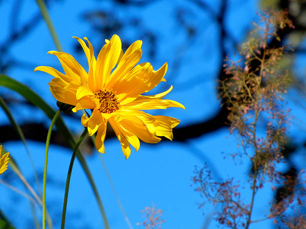 Yellow Flower Against Blue Sky stock photo