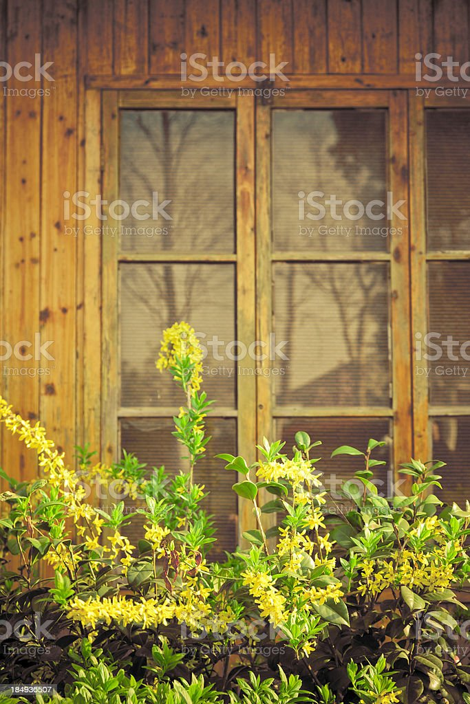 yellow flower and wooden window royalty-free stock photo
