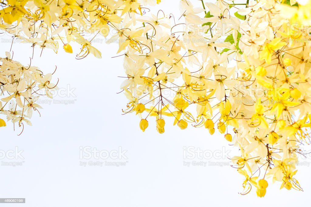 yellow flower background stock photo download image now istock https www istockphoto com photo yellow flower background gm469062196 61309634