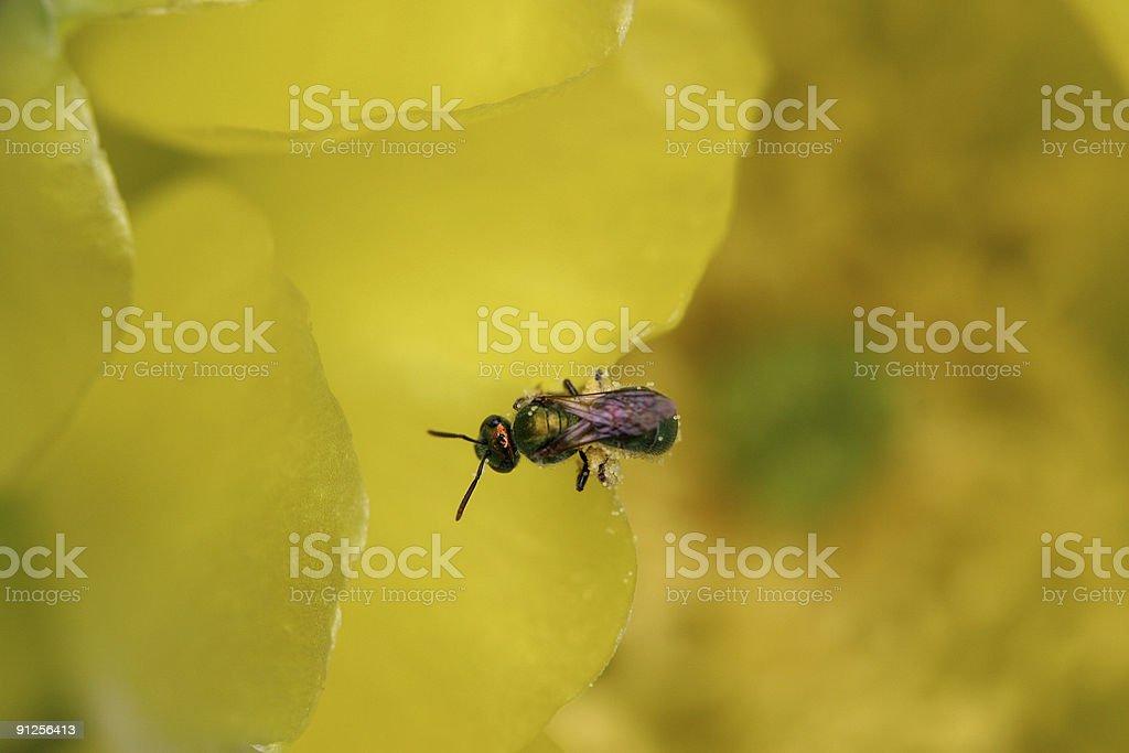 Yellow Flower & Bug stock photo