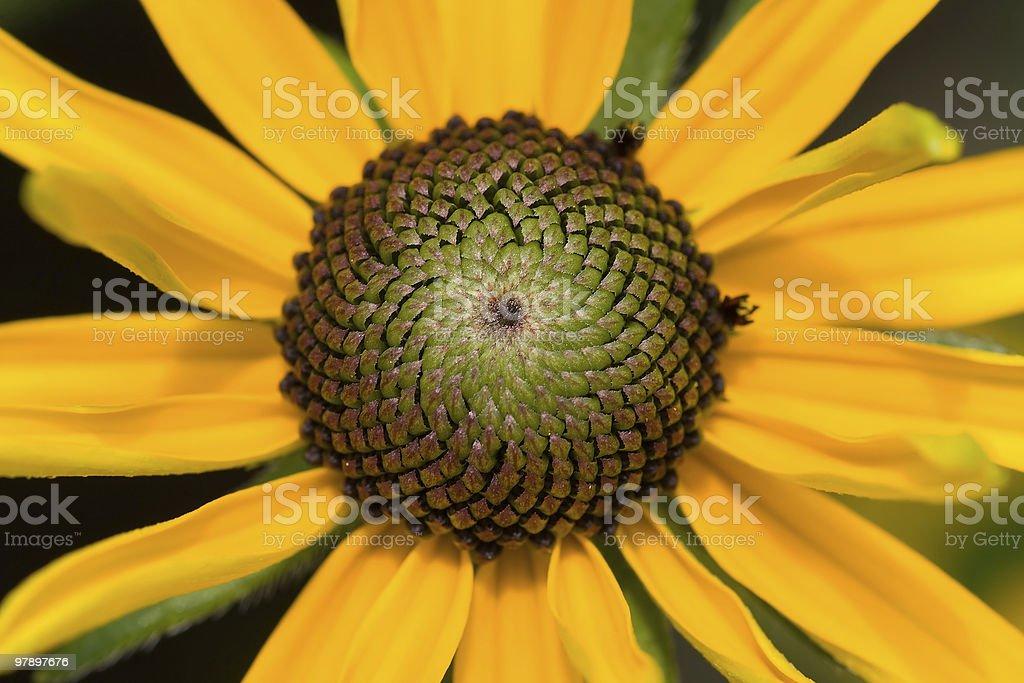 Yellow flower closeup royalty-free stock photo