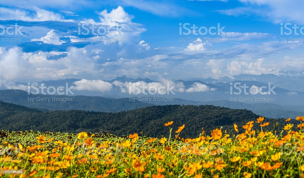 Yellow flower fields with mountain and blue sky background stock photo