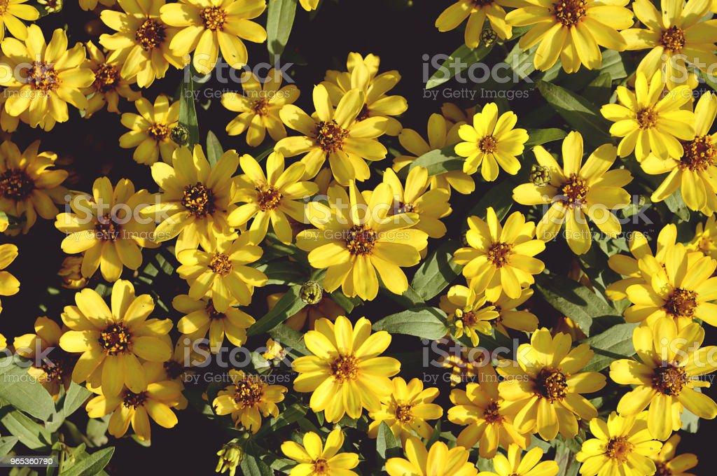 背景黃色花 - 免版稅光管圖庫照片