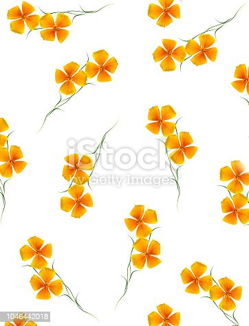 Yellow flower garden colorful eschscholzia isolated on white background.